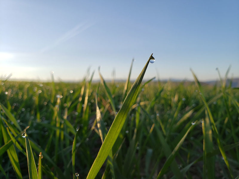 close up on a blade of grass